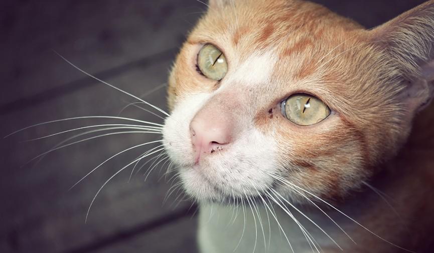 Cat LUT Cover Image