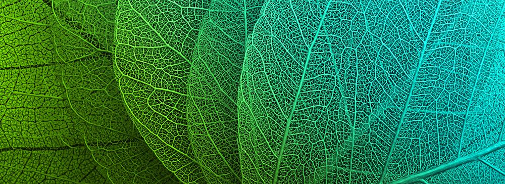 Leaf Macro Image