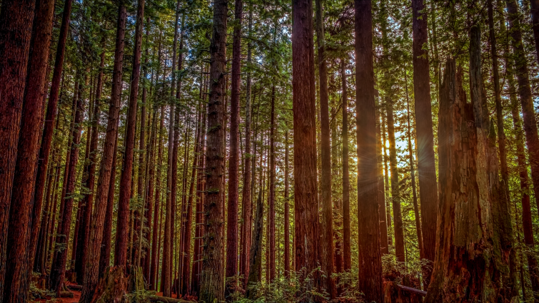 Popular Hollywood Shooting Locations: Redwoods