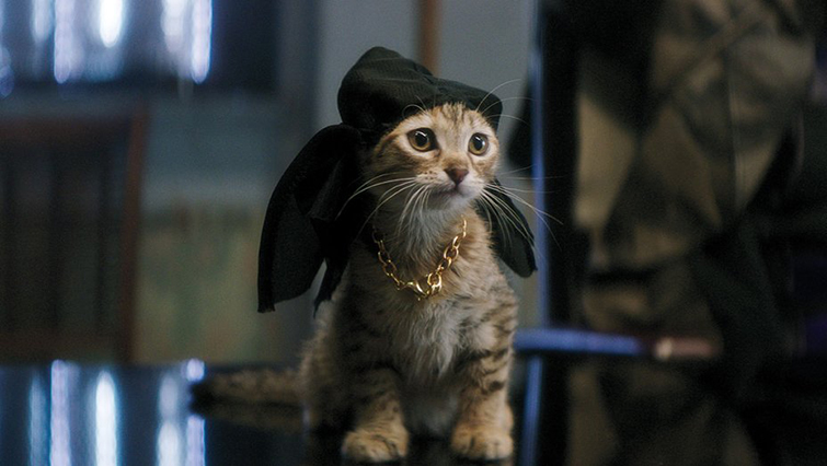 Famous Cats Throughout Film History - Keanu
