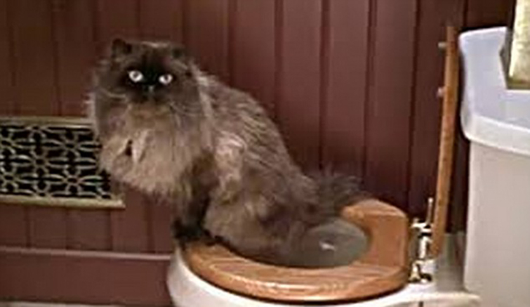 Famous Cats Throughout Film History - Mr. Jinx