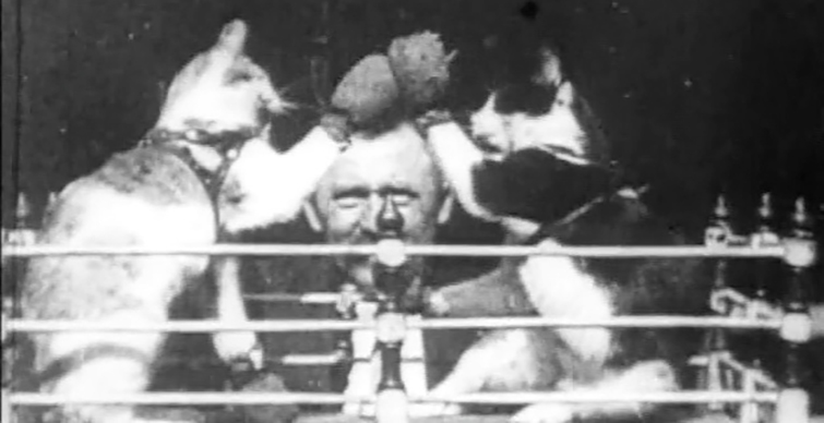Famous Cats Throughout Film History - The Boxing Cats