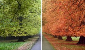 Color Grading: How to Change the Seasons in Premiere Pro