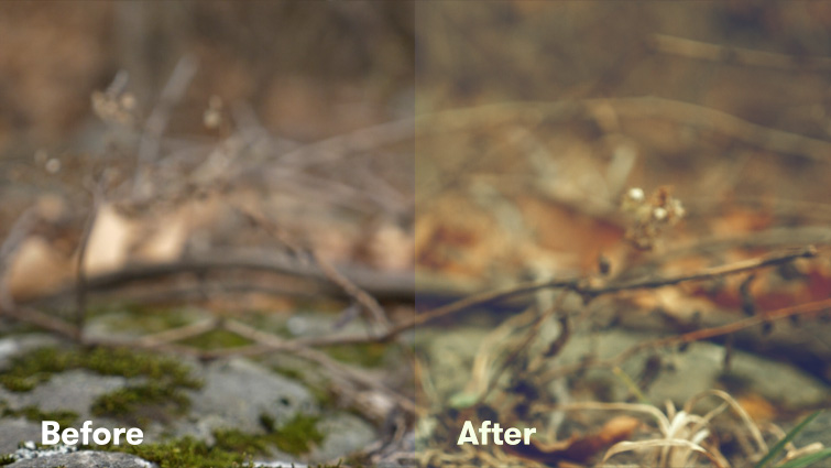 Get Better Results Using LUTs with Lumetri Color in Premiere Pro — Creative LUTs