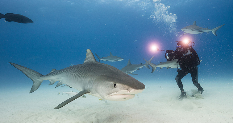 """Insights into the Cinematography of the Award-Winning Doc-Series """"Tales By Light"""" — Abraham Joffe ACS shark cinematography"""