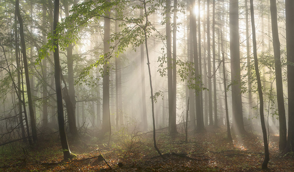 The Right In-Air Diffusion for Your Project: Haze vs. Fog vs. Smoke