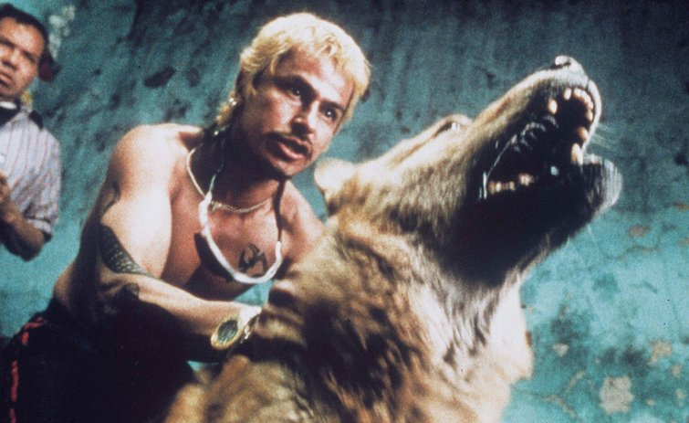 Gael García Bernal in Amores Perros