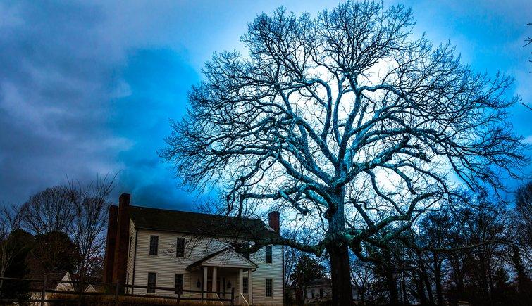 Dramatic Tree Silhouette